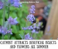 perennial plants for rock gardens in seaside areas