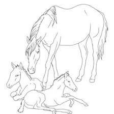 coloring pages horse foal archives mente beta