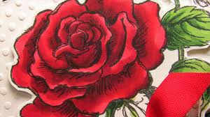 Youtube Red Color Tulip Youtube Collection Of Rose Red All Can Download Guide