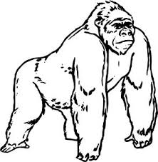 coloring page of gorilla 27 best gorilla coloring pages images on pinterest kindergarten