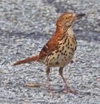 Nc Backyard Birds Backyard Birds