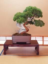 most expensive bonsai contest bonsai nut