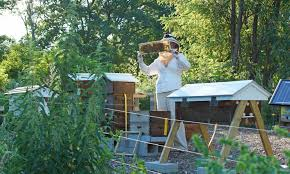 backyard beekeeping trials and tribulations of a being a beekeeper