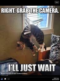 Stupid Animal Memes - lol cats are just kinda stupid funny stuff pinterest cat