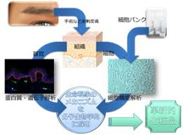 cosmetic science schools overview laboratory of advanced cosmetic science