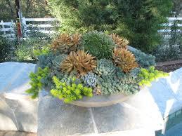 Low Bowl Planters by California Garden Designer Jennifer Voss Of Gardefacts Eye Of