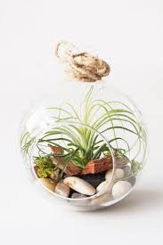 air plant terrariums u2013 plants and beautiful things