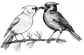 bird watcher u0027s general store