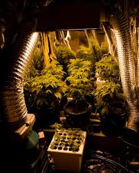 proper lights for growing weed how to grow weed knowing the required temperature water and co2