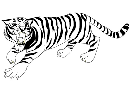 white tiger coloring pages gekimoe u2022 108290