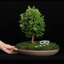 miniature bonsai gardens bonsai empire