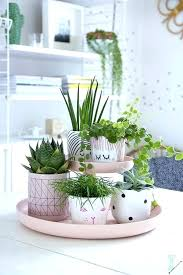 ideas for home decoration indoor plant decoration ideas home decoration plants plants plants
