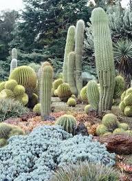 Botanical Gardens Huntington Succulents At The Huntington Botanical Gardens Garden Design