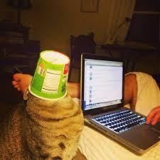 Working Cat Meme - cat exe has stopped working meme by jopi sabljak211 memedroid