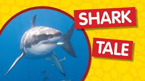 amazing animals shark tale