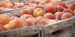 peach shortage predicted in 2017 after poor weather in georgia and