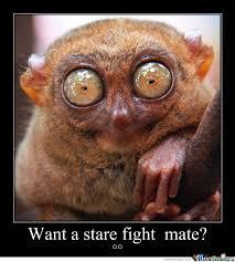 Stare Meme - stare fight by jordy meme center