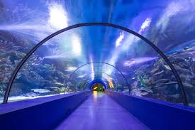 dubai plans face scanning virtual aquarium tunnel at airport new