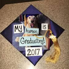 dog graduation cap 15 unique graduation caps that nobody else will gurl