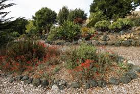 Quail Botanical Gardens Free Tuesday Slo Botanical Garden Hopes To Add Zip Lines And Other Amenities