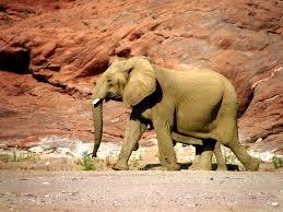 free images sand desert adventure stone desolate wildlife