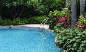 Good Backyard Trees by Backyard Pool With Shrubs And Small Trees Best Swimming Pool