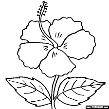 coloring pictures of hibiscus flowers hibiscus flower online coloring page