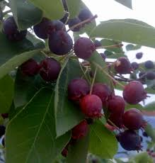 ideas for enjoying the bounty of berries ripening right now