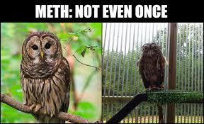 Potoo Bird Meme - potoo bird is best bird bodybuilding com forums