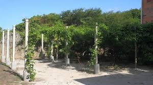 Climbing Plant Supports - easy to build supports for climbing plants hubpages