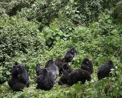 west central africa african wildlife foundation