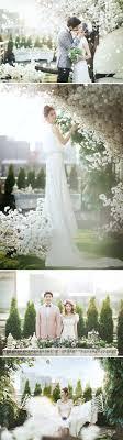 backdrop wedding korea 211 best korea wedding photography images on real