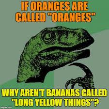 Yellow Meme - they re bananas not long yellow things imgflip
