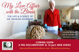 The Anatomy Of The Human Brain My Love Affair With The Brain The Life And Science Of Dr Marian