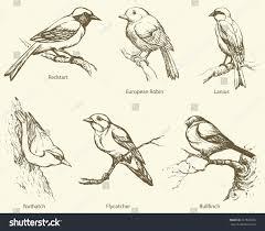 set small forest birds bullfinch innkeeper stock vector 261825356
