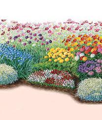 burpee designed cutting garden aster baby u0027s breath cornflower
