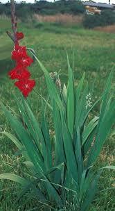 garden design garden design with how to plant fall flower bulbs