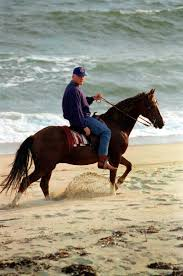 Cape Cod Horseback Riding Take A Break With Presidential Vacations Pieces Of History