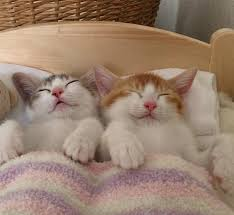 Kitten Bed Adorable Kitten Twins Love To Sleep Side By Side We Love Cats