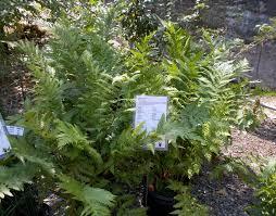 california native plants list list of california native plants naturesurrounds