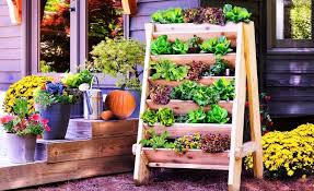 Budget Garden Ideas Cheap Gardening Ideas To Grow Veggies And Herbs In Winters