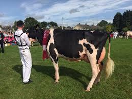 diageo baileys cow baileyscow twitter