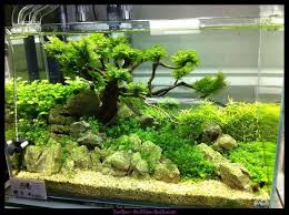 160 best fish tank images on pinterest fish tanks fishing and