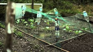 Garden Allotment Ideas Top Tips For New Allotment Holders