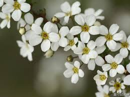 white flower white flower desktop wallpapers background