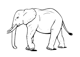 elephant coloring pages free print coloringstar
