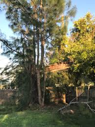 irma recovery day 3 trees and power lines the last refuge