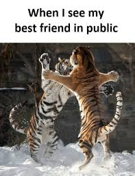 Funny Friend Memes - memes about friends mutually