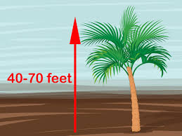 Cateracterum Palm by 2 Easy Ways To Identify Palm Trees With Pictures