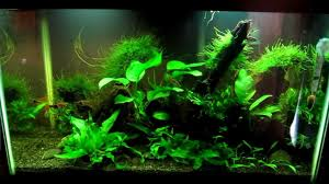 10 gallon freshwater aquarium update 1 8 13 youtube